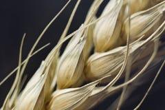 rośliny makro- banatka Fotografia Stock