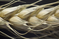 rośliny makro- banatka Fotografia Royalty Free