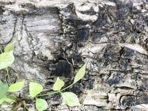 rośliny murawa Obraz Stock