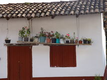 Rośliny na desce Fotografia Stock