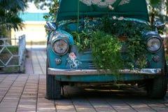 Rośliny na kapiszonie stary samochód Zdjęcia Royalty Free