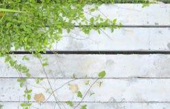 Rośliny na starym betonie Zdjęcie Royalty Free