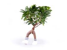 rośliny odprowadzenie Zdjęcia Royalty Free