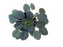 rośliny okno Zdjęcia Stock
