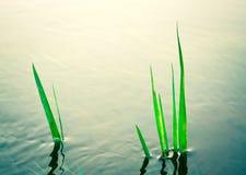 rośliny parkowa woda Obraz Stock