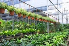 Rośliny pepiniera Obraz Stock