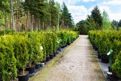 Rośliny pepiniera Zdjęcie Stock