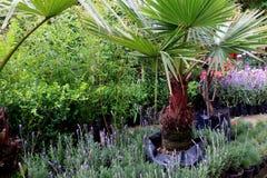 Rośliny pepiniera w Coyoacan Meksyk obraz royalty free