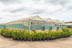 Rośliny pepiniera warzywo Obrazy Royalty Free