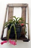 Rośliny poparcie Zdjęcie Stock