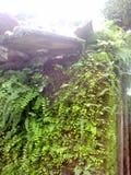 Rośliny r na domu fotografia royalty free