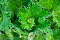 rośliny spirala Zdjęcie Stock