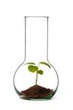 rośliny tubka Fotografia Stock