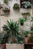 Rośliny w garnkach Fotografia Royalty Free