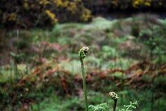 Ro?liny w glendalough Irlandia zdjęcie stock