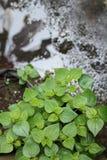 Rośliny w jardzie, wersja 4 Zdjęcie Royalty Free