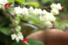 Rośliny w jardzie, wersja 8 Zdjęcie Royalty Free