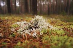 Rośliny w lasowej jesieni zdjęcie royalty free