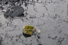 Rośliny w nafcianym zanieczyszczeniu Zdjęcia Stock