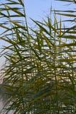 Rośliny w Nile rzece Egypt Obrazy Royalty Free