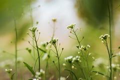 Rośliny w ogródzie Fotografia Royalty Free