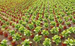Rośliny w perspektywie w holenderskiej szklarni Fotografia Stock