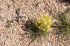 Rośliny w pustyni Fotografia Royalty Free