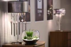 Rośliny w wazie Zdjęcia Stock