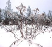 Rośliny w zima lesie Fotografia Stock