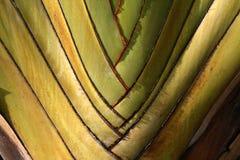 rośliny wzoru Zdjęcie Royalty Free