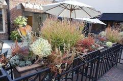 Rośliny z parasolem Obrazy Stock