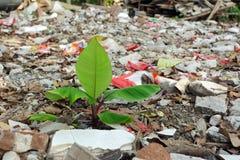 rośliny zanieczyszczenie Obrazy Stock