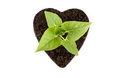 rośliny ziemia zdjęcie royalty free