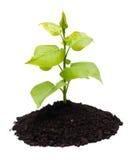 rośliny ziemia Zdjęcie Stock