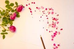 Ro med petals Royaltyfri Bild