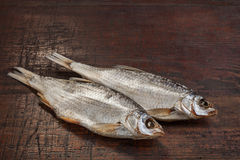 Roach Αστραχάν ψαριών Στοκ Εικόνα