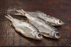 Roach Αστραχάν ψαριών Στοκ εικόνα με δικαίωμα ελεύθερης χρήσης