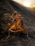roach βιολιστής Στοκ εικόνες με δικαίωμα ελεύθερης χρήσης