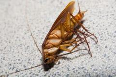 Roach κύκλωμα Στοκ Εικόνες