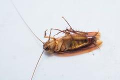 Roach μορφή Στοκ φωτογραφία με δικαίωμα ελεύθερης χρήσης