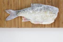 Roach fish. Stock Photos