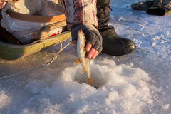 Roach fishing. Fishing on lake in -15 degrees (��) Celsius, 5 (F) Fahrenheit Stock Images