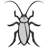 Roach Illustration