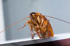 Roach life royalty free stock photography