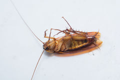 Roach shape royalty free stock photo