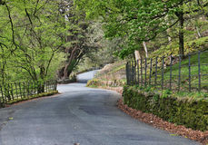 Road. Lane with trees in lake district, uk Stock Images