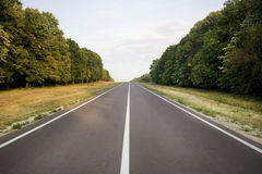 The Road. A straight road through the forest with trees from both sides Stock Photography