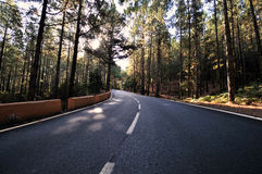 Road. A road in the mountains through a forest Royalty Free Stock Images