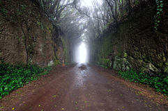 Road. A road in the mountains through a forest with dense cloud cover Stock Photography