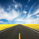 Road. Between yellow rape seed fields Stock Image